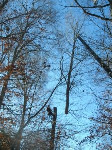 Tree-euthanasia