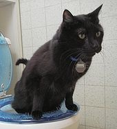 170px-Toilet_Trained_Cat_22_Aug_2005
